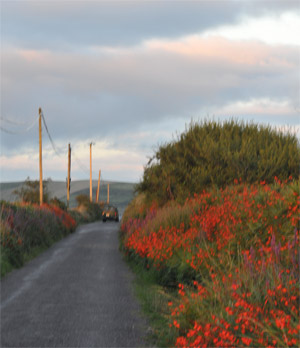 hedgerow on cycling route west kerry